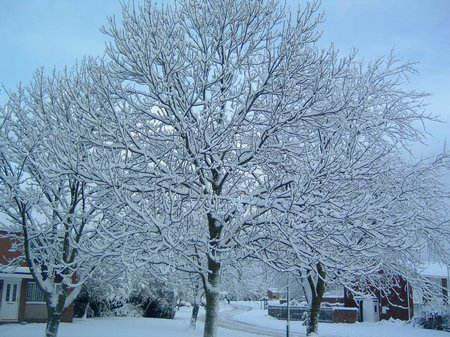 Snow Pictures 2010