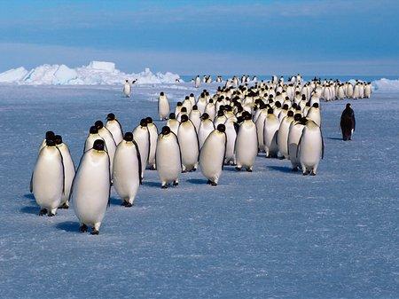 Polar RLPO
