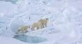Image 5: Polar RLPO