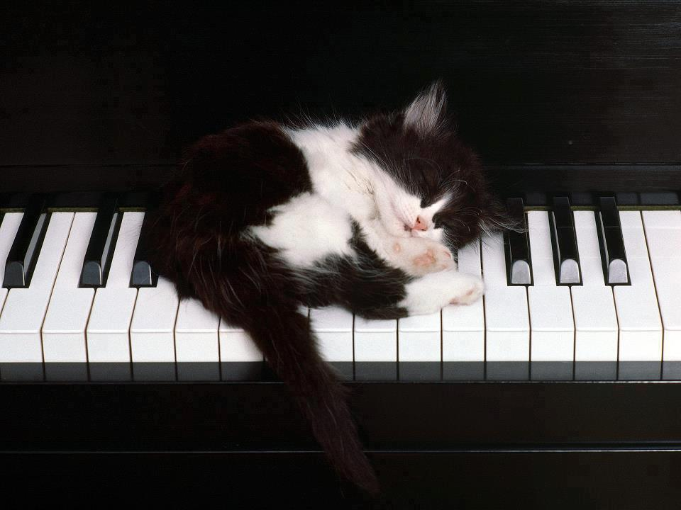 pets playing music