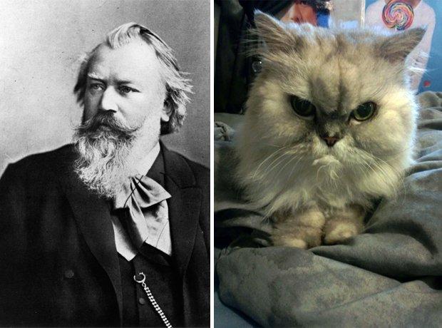 Cat composer lookalike Brahms