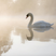 Image 10: swan