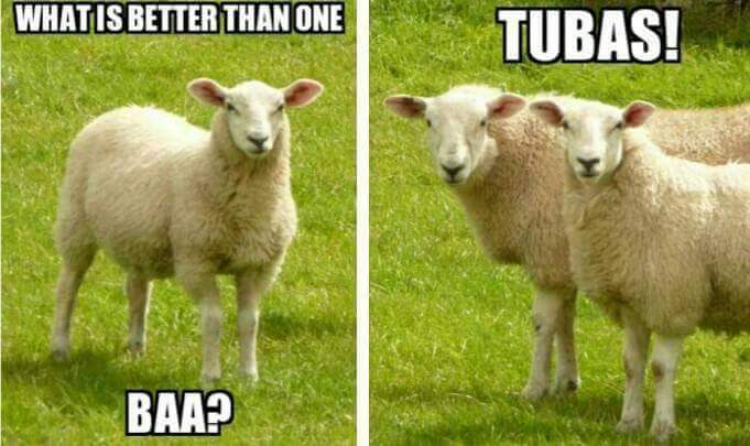 Tubas sheep meme