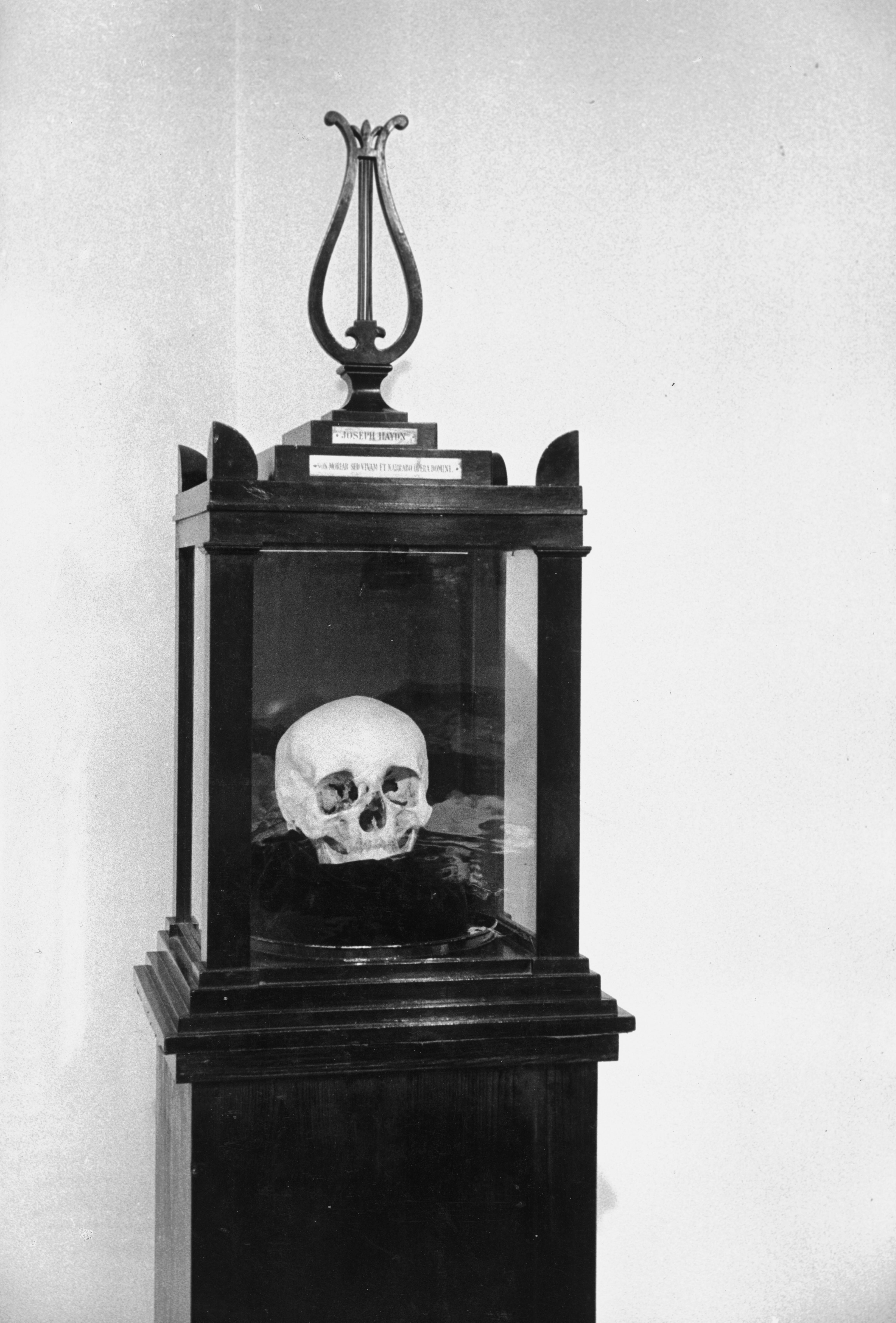 Haydn skull in display case. Lessing Images