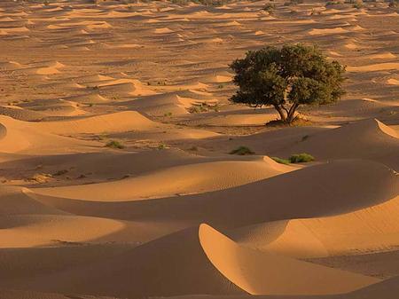 Trek Sahara - dunes and tree