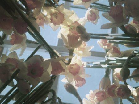Mothering Sunday Dedications, Flower, Flowers