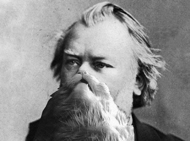 johannes brahms and a cat beard the great composers with cat