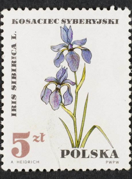 flowers on Polish stamp