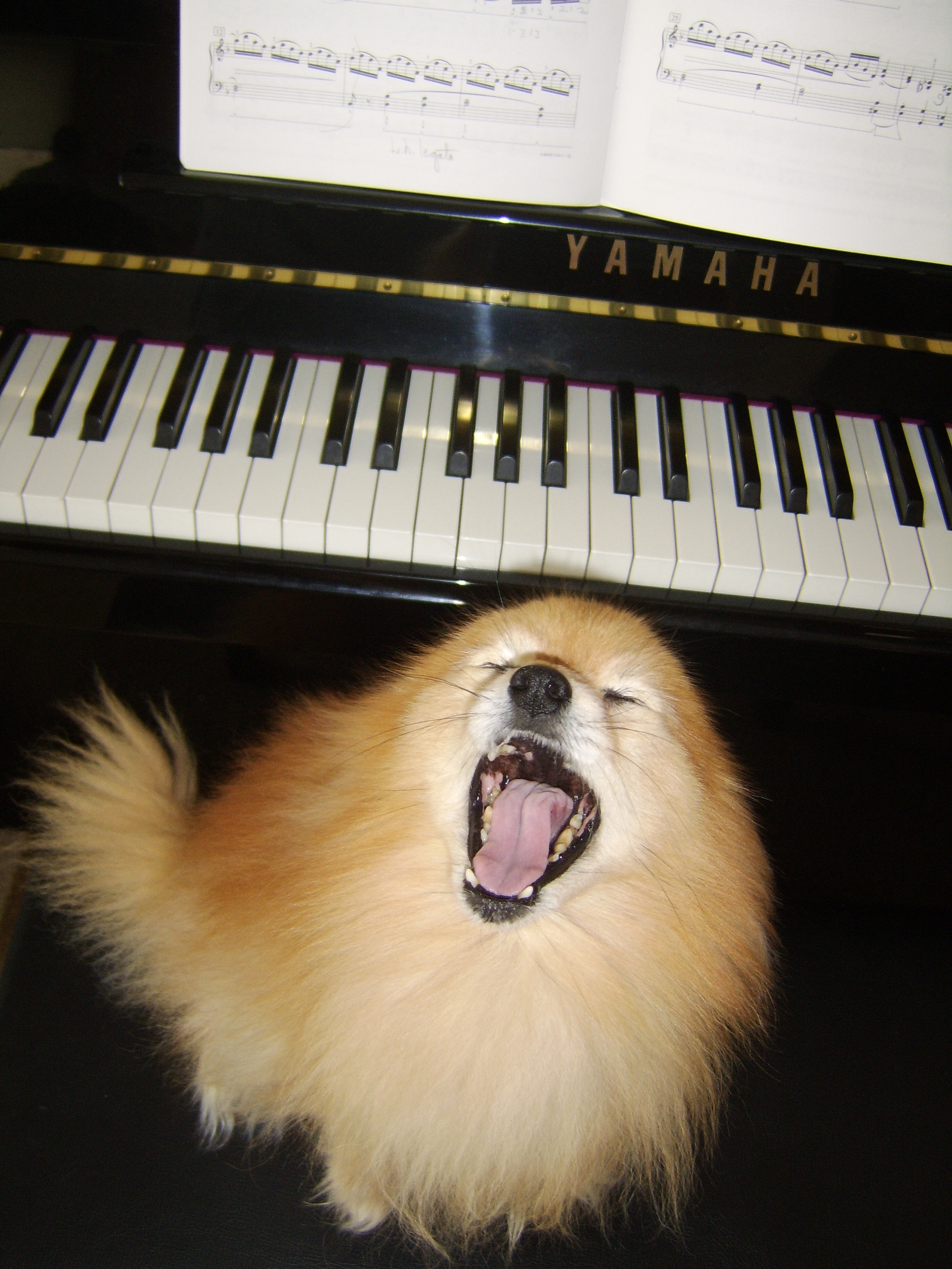 classical music dog