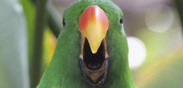 Six parrots that can s...