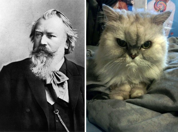 Cat composer lookalike Brahms