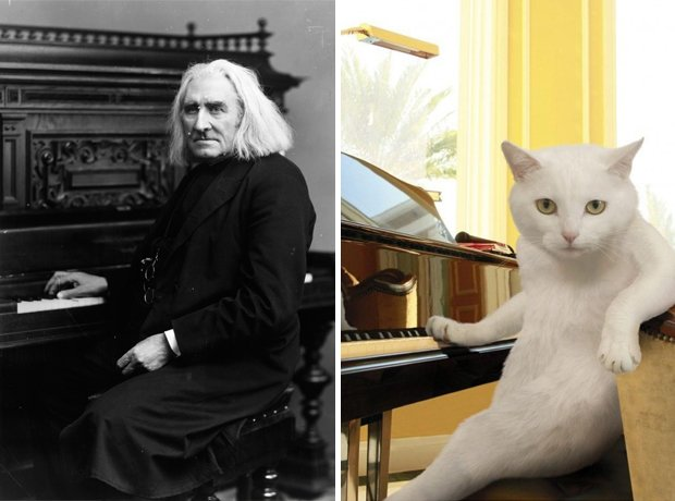Cat composer Liszt