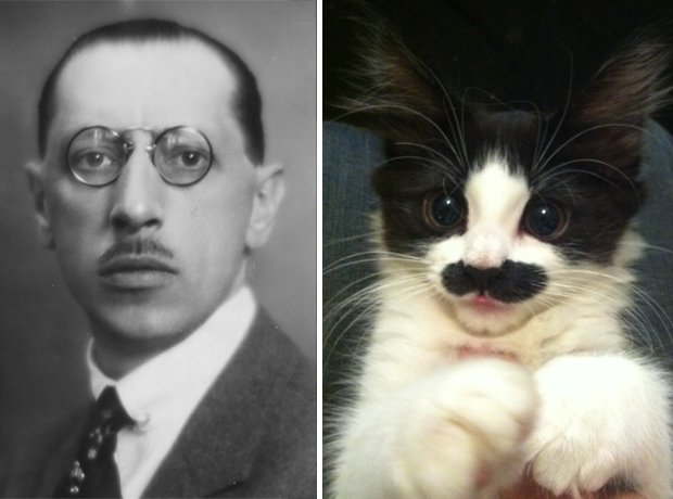 Cat composer lookalike Stravinsky