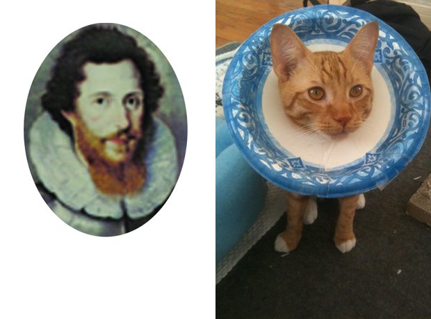 Dowland and cat