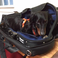 Image 9: animals in instrument cases