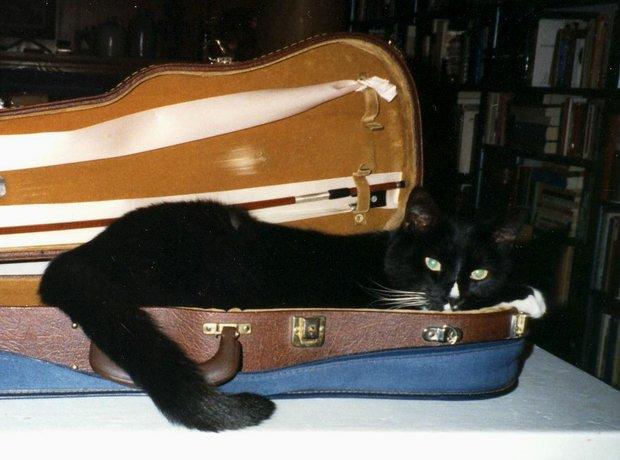 animals in instrument cases