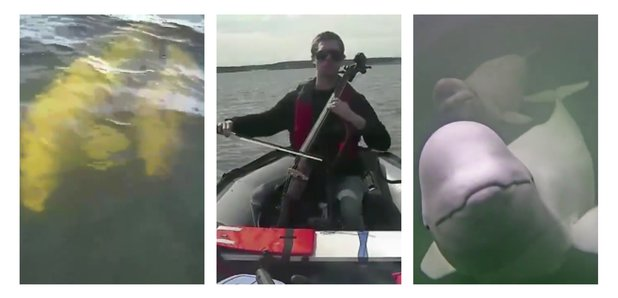 These whales responded to a cello being played, and it's incredibly beautiful