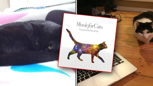 Cats Listen To Music For Cats Album And Give Their Verdict